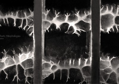 bioplastic morphologies1